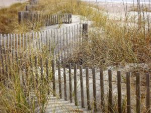 grass around a dune fence on one of the beaches near charleston sc