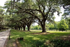 the various plantations near charleston sc are some of the best kid friendly attractions in charleston sc