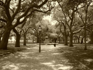 under the live oaks of white point gardens in downtown charleston sc