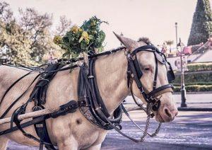 romantic carriage ride to enjoy on romantic weekend getaways in charleston sc
